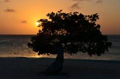 Orange Sunset in Aruba on Eagle Beach Royalty Free Stock Photos
