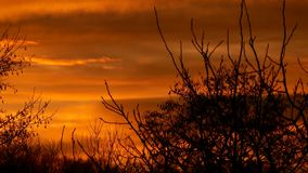 Orange sunset. A beautiful autumn evening. Bare tree branches. Full HD stock video