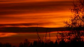 Orange sunset. A beautiful autumn evening. Bare tree branches. Full HD stock video footage