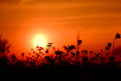 Orange sunset. Beautiful orange sunset among small flowers royalty free stock photo
