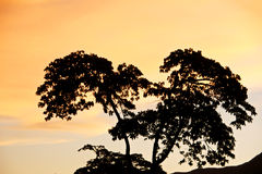 Orange sunset. The branches of a tree contrast with the orange sunset in the town of San Diego. Venezuela royalty free stock photography