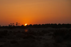Orange sunset in the desert with silhouettes of palms. Dark orange sunset in the desert with silhouettes of palms and bushes Royalty Free Stock Photos