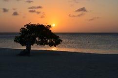 Orange Sunset on Eagle Beach in Aruba Royalty Free Stock Photos