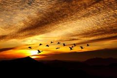 Orange sunset with flying crane birds Royalty Free Stock Images