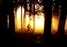 Orange sunset in the forest. A child drive a bike in a forest, at sunset royalty free stock photography