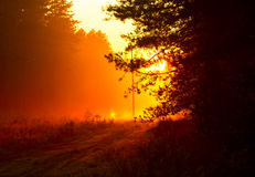 Orange sunset at the forest after  rain Stock Photography