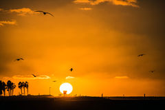 Free Orange Sunset In California With Palms And Seaguls Royalty Free Stock Image - 80995296