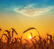 Orange sunset over field with harvest Royalty Free Stock Photos