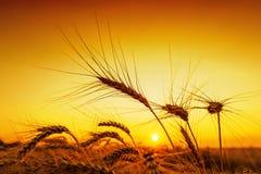 Orange sunset over harvest field Royalty Free Stock Images