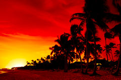 Orange sunset over palm beach near sea. In summer Royalty Free Stock Photos