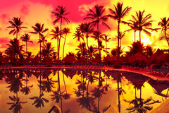 Orange sunset over palm beach near sea Stock Image
