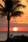 Orange Sunset over the water on the beach with coconut palm tree and mangroves in Islamorada in the Florida Keys Stock Images