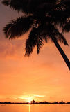 Orange sunset with palm trees Stock Image