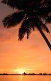 Orange sunset with palm trees Stock Image