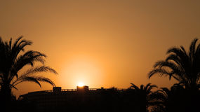 Orange Sunset With Palm Trees Stock Photography