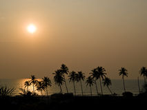 Orange sunset on the sea. Sunset on the sea against a palm silhouette Stock Photography