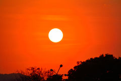Orange sunset. Silhouette tree at natural landscape Royalty Free Stock Image