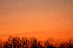 Orange Sunset, with silhouetted trees Royalty Free Stock Image