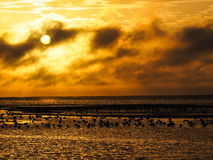 Orange sunset sky with flamingos stock images