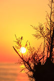 Orange sunset with tree Royalty Free Stock Photos