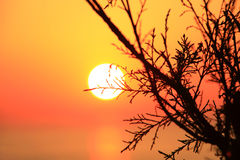 Orange sunset with tree silhouette Royalty Free Stock Images