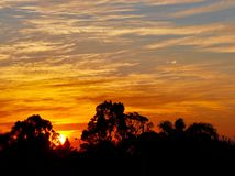 Orange Sunset with Tree Silhouette: Western Australia Stock Images