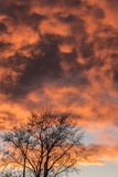 Orange Sunset And Tree Royalty Free Stock Photography