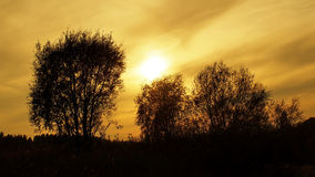 Sunset and trees Stock Photo