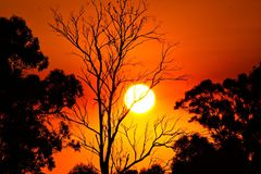 Orange Sunset Through Trees. A sunset occurs when the sun descends below the horizon and the light of the day slowly fades. This happens at different times Royalty Free Stock Images
