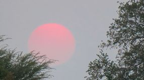 Orange sunset between trees in. The sun is light orange in the pale blue Botswana skies royalty free stock images