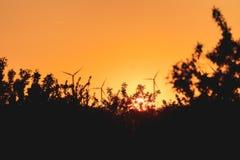 Orange sunset among trees and windmills. Magic orange sunset around nature and renewable energy royalty free stock image
