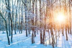 Orange sunset in winter forest stock photo