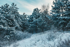 Orange sunset in winter forest Stock Photography