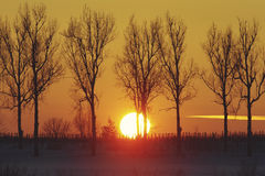 Orange sunset in winter forest Royalty Free Stock Images