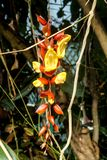 Orange sur la fleur jaune images libres de droits