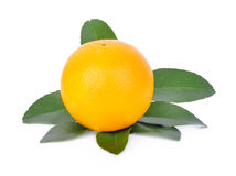 Orange sur le fond blanc Image libre de droits