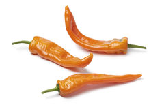 Orange sweet peppers Stock Images