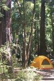 Orange tält i redwoodträden royaltyfri fotografi