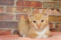 Orange tabby on blanket Stock Photo