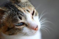 Orange Tabby Cat Stock Images
