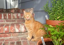 Orange Tabby cat on back porch rustic home royalty free stock images