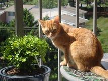 Orange tabby cat Royalty Free Stock Photos