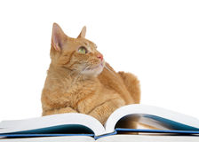 Orange tabby cat on book looking up to viewers right Stock Image