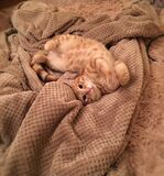 Orange Tabby Cat on Brown Textile Stock Photo