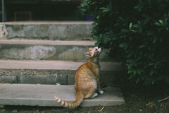 Orange Tabby Cat on Grey Concrete Steps Royalty Free Stock Photos