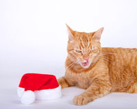 Orange tabby cat laying  next to santa hat with mouth open. Like that did not taste very good Royalty Free Stock Photo