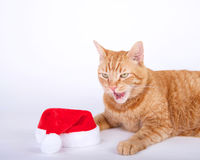 Orange tabby cat laying  next to santa hat with mouth open. Squinting as if just ate something unpleasant Royalty Free Stock Photography