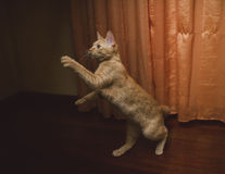 Orange tabby cat lying Stock Images