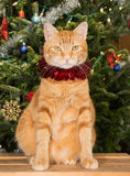 Orange tabby cat sitting in front of a Christmas tree Royalty Free Stock Photos