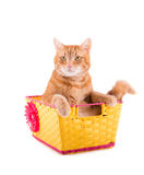 Orange tabby cat sitting in a yellow and pink basket Royalty Free Stock Photos
